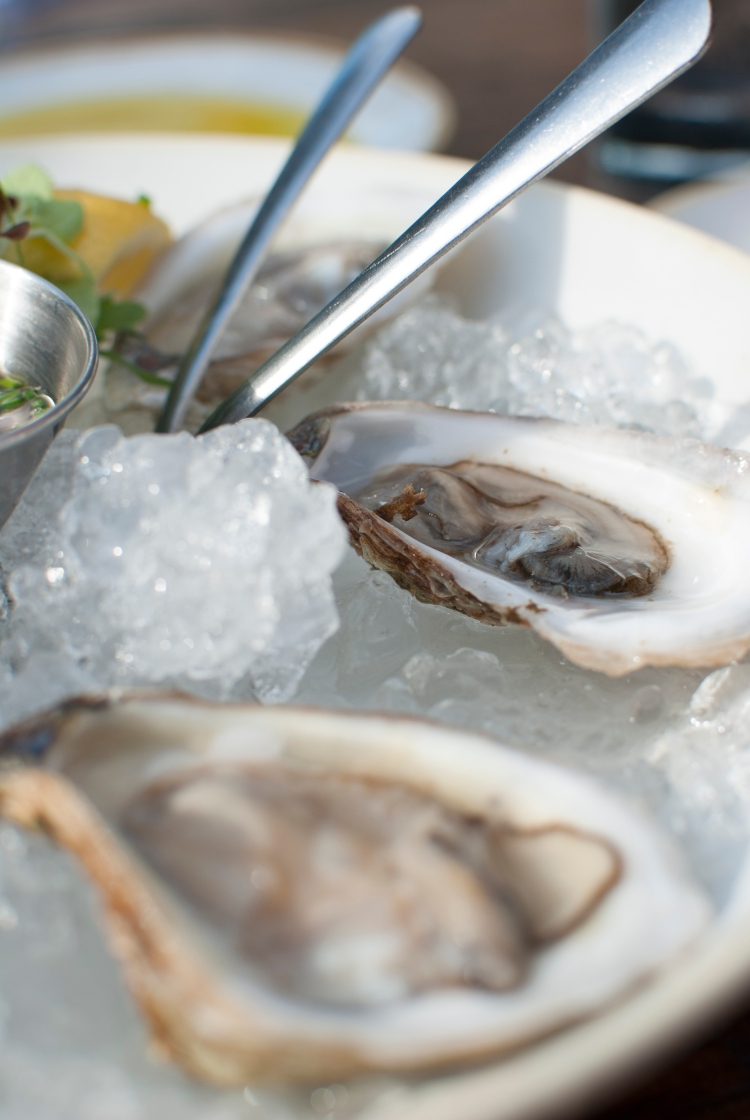 Oysters_2